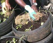 jda.org.za-JDA builds green rooftop gardens
