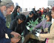 jda.org.za-Rooftop garden plants seeds of success